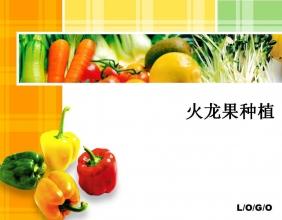 火龙果种植